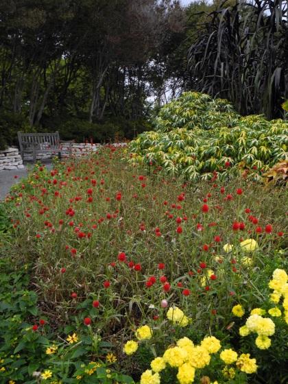 Arboretum Red Flowers